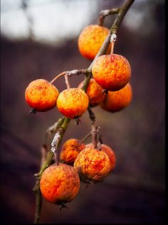 Beautiful colors... persimmons
