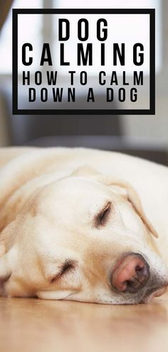 In this bumper article of tips and advice, we equip you with training techniques, calming aids and practical solutions for how to calm down a dog. Really Funny Dog Videos, Dog Nipping, Dachshund Breed, Dachshunds, Female Dog In Heat, Dog Whining, Excited Dog, Calm Down, Dog Training Tips