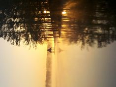 this morning near my house- Swift Creek Reservoir, Midlothian, VA