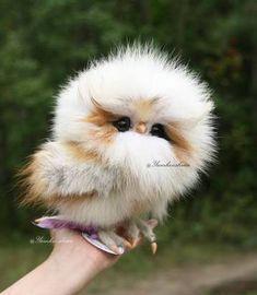 「cute bird」の画像検索結果