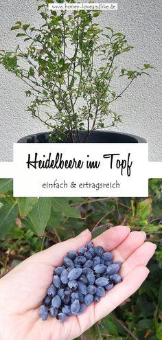 Heute zeige ich dir, wie man eine Heidelbeere im Topf hält und wie das mit der Ernte etwas wird! #Heidelbeere #Blaubeere Decoration, Hydrangea, Blackberry, Recycling, Fruit, Tricks, Repurposing, Yard Ideas, Harvest