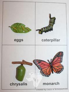Libre de Ciclo de Vida de un paquete de la mariposa - 3Dinosaurs.com