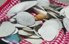Zmudowski Beach, California~ Seashells
