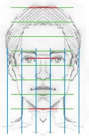 this shows the proportion of someone's face.