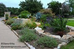 combination of xeriscape and hardscape to produce a drought tolerant, no mow landscape