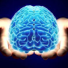 Habitos que perjudican el cerebro: Fumar, Reacciones violentas o estrés prematuro, No desayunar, Consumo elevado de azúcares, No comer las cantidades adecuadas, Cubrirse la cabeza al dormir, Dormir poco, Exposición constante a ambientes contaminados, Forzar al cerebro durante una enfermedad. El cerebro es el mayor órgano del sistema nervioso central y forma parte del centro de control de todo el cuerpo. ¡A cuidarlo!