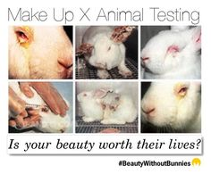Here are brands that test on animals by imageconsultingzurich on Polyvore featuring polyvore, beauty and White Label