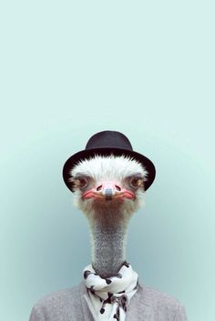Ostrich, Zoo Portraits by Yago Partal