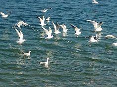 GaleryPhoto / Mať tak krídla a letieť ako vták