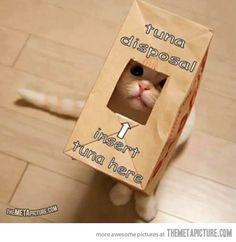 Gimme tuna… cuteeeee...