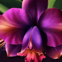 Clipart Etc Orchids