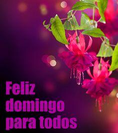 Mejores 455 Imagenes De Feliz Domingo En Pinterest Good Morning