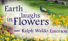 """Earth laughs in flowers."" ~ Ralph Waldo Emerson"