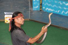 Snake, Animals, Animais, Animales, Animaux, Animal, Snakes