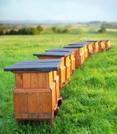 Bee hive at home: the 5 things to know Green Garden, Vegetable Garden, Garden Plants, Agriculture, Bee Images, Bee Farm, Cultural Architecture, Save The Bees, Bee Keeping