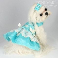 photo of puppies with dresses on - Yahoo Search Results