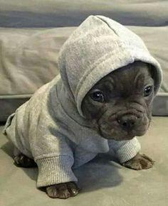 ♡ Baby Pitt Bull – Sembra un cucciolo di foca! Cute Funny Animals, Cute Baby Animals, Animals And Pets, Cute Dogs And Puppies, I Love Dogs, Doggies, Cute Pitbull Puppies, Pit Bull Puppies, Cockapoo Puppies