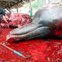 Japanese government: To Stop The Killing of Whales in Australian waters and around the WORLD http://www.change.org/petitions/japanese-government-to-stop-the-killing-of-whales-in-australian-waters-and-around-the-world?share_id=IsrFdeTJBq_campaign=signature_receipt_medium=email_source=share_petition @sea Shepherd Conservation Society #defendconserveprotect