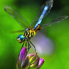 Dragonfly at Rest by Mary McNeeley