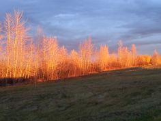 early fall morning in alberta