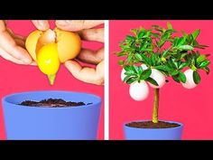 Lifehacks that will change your whole life For those of you who love pranking people or would like to make someone smile, we have the best prank and hacks c. Hacks Diy, Food Hacks, Pranking People, Kitchen Life Hacks, Life Hacks Youtube, Egg Tree, Good Pranks, Tortilla Wraps, Fruit Flowers