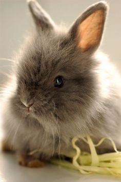 Tiny baby bunny.