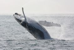 Whalewatching in Newcastle, Australia, 2010 - what an amazing experience!