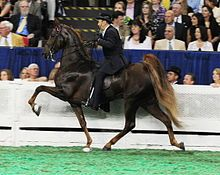 American Saddlebred - Wikipedia, the free encyclopedia