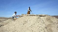 Dawn of man: Ethiopian jawbone fossil pushes back human origins  A 2.8-million-year-old jawbone fossil with five intact teeth unearthed in an Ethiopian desert is pushing back the dawn of humankind by about half a million years.