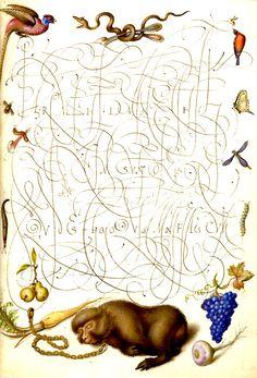 "Joris Hoefnagel, miniature painting, ""Folio from Calligraphic Specimen Book, miniature painting; Illuminated Letters, Illuminated Manuscript, Botanical Illustration, Botanical Prints, Medieval Memes, Medieval Manuscript, Vintage School, Sketchbook Inspiration, Lettering"