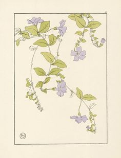 An poster sized print, approx (other products available) - Decorative flower study by Jeannie Foord, of Lesser Periwinkle plant.<br> 1899 - Image supplied by Mary Evans Prints Online - Poster printed in the USA Botanical Drawings, Botanical Illustration, Botanical Prints, Botanical Flowers, Fine Art Prints, Framed Prints, Canvas Prints, Periwinkle Plant, Art Nouveau Design