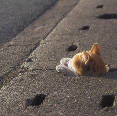 日本だけでなく海外でも話題になっている側溝で遊ぶ日本の猫の写真がタイでも紹介されていました。思わず頬が緩んでし…