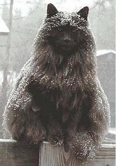Mad Snow Cat :)