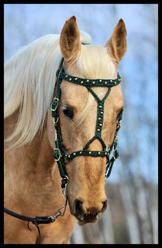 love this bridle!