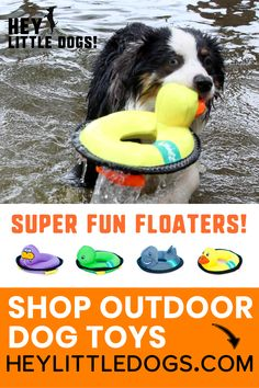 Take outdoor playtime with your dog to the next level with these floating dog toys! Cute designs that float & squeak - perfect for the pool or beach. We tested these dog toys with our Cuteness Squad and the dogs were fighting over them! They come in the shark, turtle, walrus & duck! These floaters are sure to be one of your dog's favorite toys for outdoor & indoors. #dogtoys #interactivedogtoys #cutedogtoys #puzzledogtoys #stimulatingdogtoys #dogstuff #dogsupplies #durabledogtoys… Cute Dog Toys, Best Dog Toys, Cute Dogs, Stimulating Dog Toys, Pet Friendly Vacation Rentals, Outdoor Dog Toys, Durable Dog Toys, Interactive Dog Toys, Dog Beach