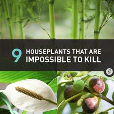 9 Houseplants That Are Almost Impossible to Kill #home #plants #greenthumb