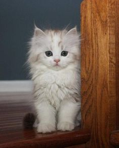 I Love Kittens and Cats