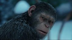 "Andy Serkis plays Caesar in ""War for the Planet of the Apes"""