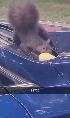 Animal Jokes, Funny Animal Memes, Funny Animal Videos, Funny Animal Pictures, Funny Dogs, Funny Vid, Crazy Funny Memes, Really Funny Memes, Hilarious