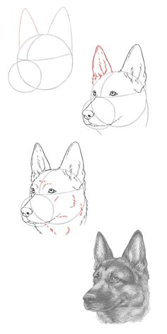Learn To Draw Animals - Animal drawings sketches, Pencil drawing tutorials, Dog drawing tutorial, Pencil drawings, Drawings - Dog Drawing Tutorial, Pencil Drawing Tutorials, Art Tutorials, Pencil Art Drawings, Art Drawings Sketches, Drawings Of Animals, Drawings Of Dogs, How To Draw Sketches, Dog Pencil Drawing