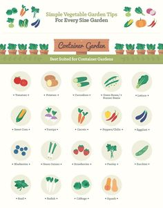 Best vegetables for a container - Infographic