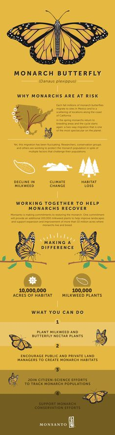 Addressing the decline of monarch butterflies is something that a lot of us could do something about. This gives an idea on the issue & ways to make a difference.