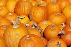 MLB Pumpkin carving kits!
