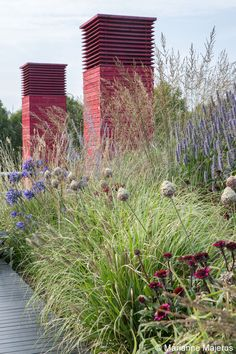terraces of the National Theatre, London. Tall grasses, airy mauve Perovskia, chubby spikes of Agastache, egg-shaped heads of Allium, Agapanthus , and Echinacea purpurea in the foreground
