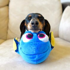 """Hope you're doing well.From your friends at phoenix dog in home dog training""""k9katelynn"""" see more about Scottsdale dog training at k9katelynn.com! Pinterest with over 20,400 followers! Google plus with over 143,000 views! You tube with over 500 videos and 60,000 views!! LinkedIn over 9,200 associates! Proudly Serving the valley for 11 plus years!"""