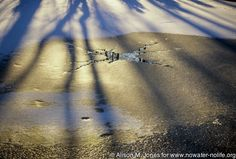 © Alison M. Jones #shadow #nature #sunshine #beautiful