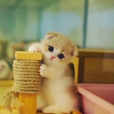 This little kitten is irresistible 💕 Join our group: Purrtacular Little Kittens, Cute Cats And Kittens, Baby Cats, Kittens Cutest, Cute Little Animals, Cute Funny Animals, Animals For Kids, Beautiful Kittens, Small Cat