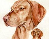 Custom paintings of dogs cats, vizsla 8x10 original watercolor painting of pets pet portrait home decor earthspalette