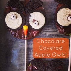 chocolate covered apple owls