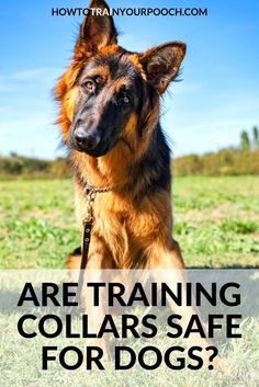 Looking for the best dog training collar? Bark Collars For Dogs, Dog Collars, Dog Shock Collar, Stop Dog Barking, Most Beautiful Dogs, Buy A Dog, Best Dog Training, Aggressive Dog, Training Collar